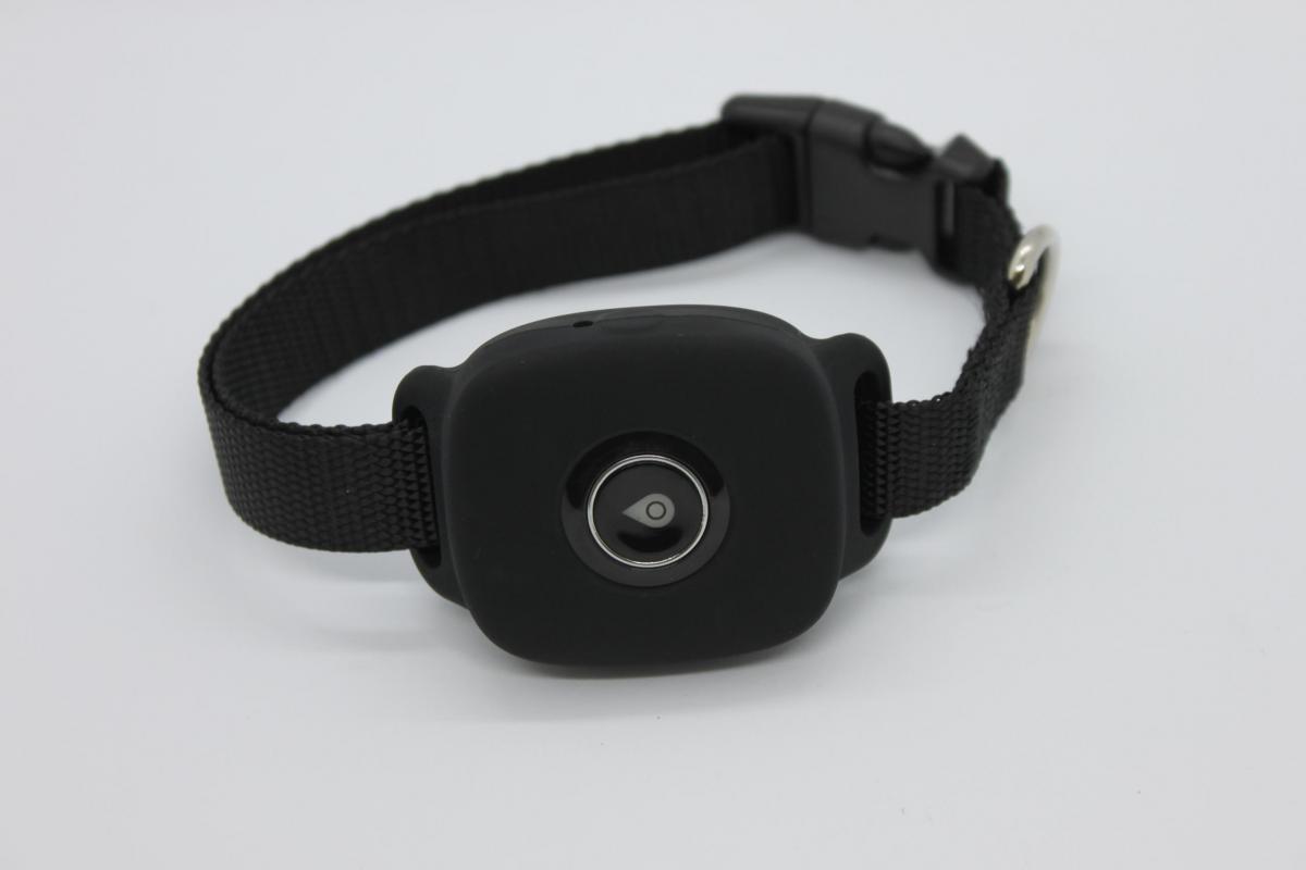 GPS Collar